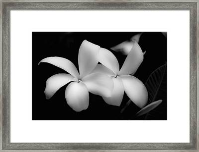 Soft Floral Beauty Framed Print