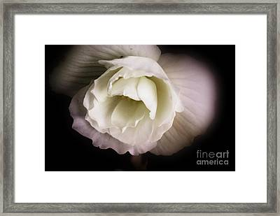Soft Flower In Black And White Framed Print