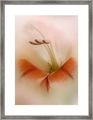 Soft Gladiolus Framed Print