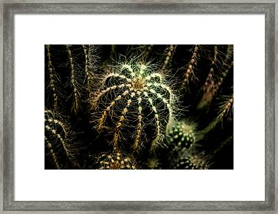 Soft Hearted Framed Print
