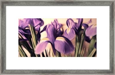 Soft Iris Framed Print