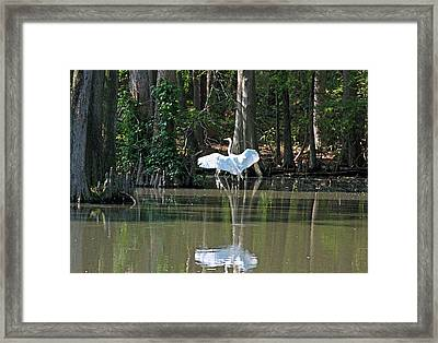 Soft Landing II Framed Print by Suzanne Gaff