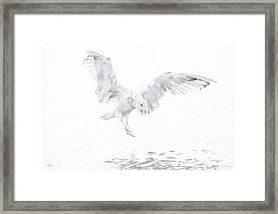Soft Landing Framed Print
