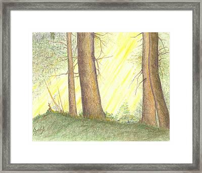 Soft Light Framed Print