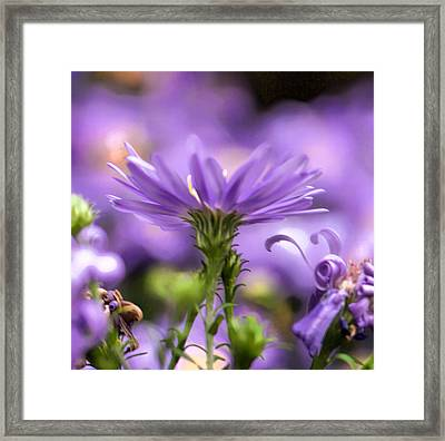 Soft Lilac Framed Print