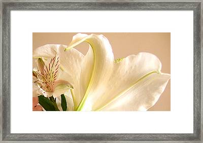 Framed Print featuring the photograph Soft Lily Photograph by Mary Bedy