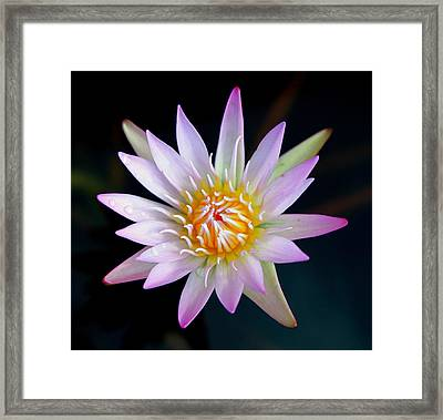 Soft Lullabye Framed Print by Karen Wiles