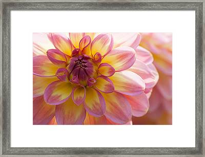 Soft Framed Print by Mark Alder