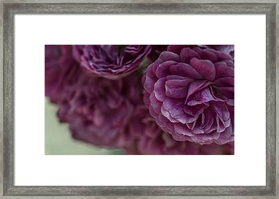 Framed Print featuring the photograph Soft Melody by Julie Andel