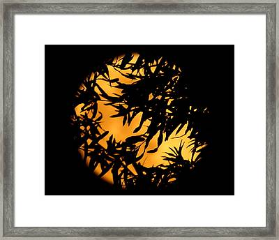 Soft Moon Silhouette Framed Print by Chris Fraser