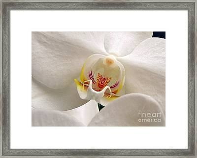 Framed Print featuring the photograph Soft Orchid by Kathi Mirto