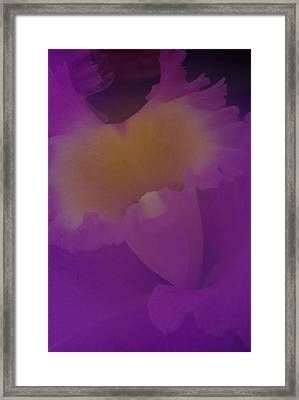 Soft Orchid Framed Print