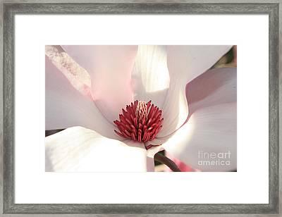 Soft Pink Blossom Framed Print