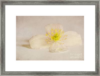 Soft Pink Flower Framed Print by Svetlana Sewell