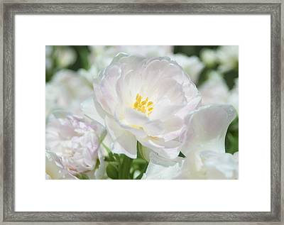 Framed Print featuring the photograph White Flower Is Beautiful by Haleh Mahbod