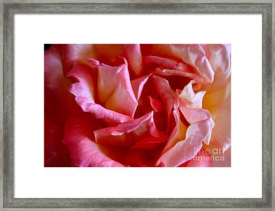 Framed Print featuring the photograph Soft Pink Petals Of A Rose by Janice Rae Pariza