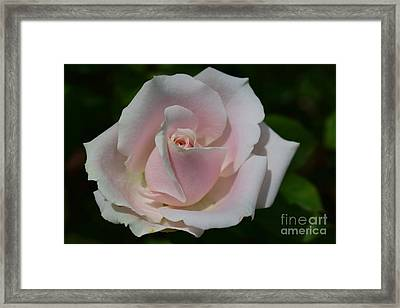 Framed Print featuring the photograph Soft Pink Rose by Jeannie Rhode