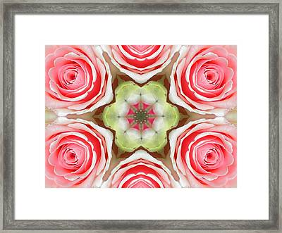 Soft Pink Rose Mandala Framed Print