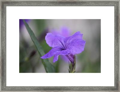 Framed Print featuring the photograph Soft Purple Floral by Penny Meyers