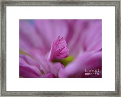 Soft Purple Framed Print by Michelle Meenawong