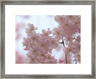 Framed Print featuring the photograph Soft... by Rachel Mirror