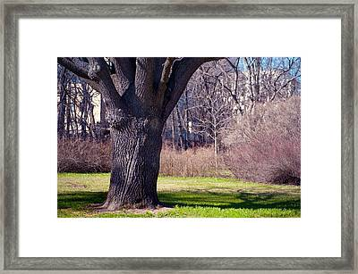 Soft Rosy Spring In The Garden Framed Print by Jenny Rainbow