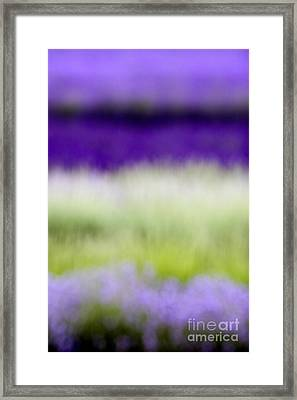 Soft Shades Of Lavender Framed Print by Tim Gainey