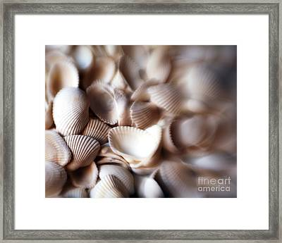 Soft Shells Framed Print