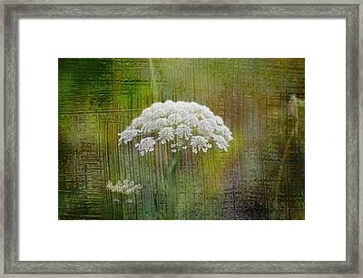 Soft Summer Rain And Queen Annes Lace Framed Print by Suzanne Powers