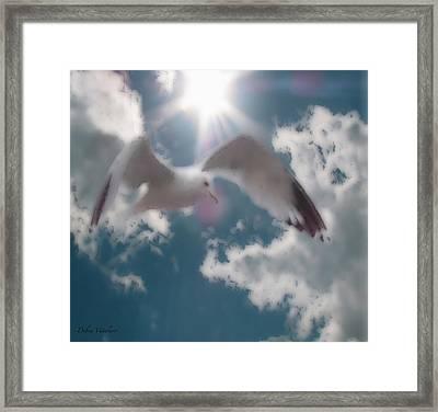 Soft Touch Seagull Fly  Framed Print by Debra     Vatalaro