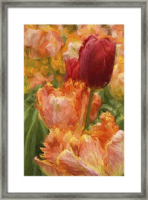 Soft Tulips Framed Print by Paul W Faust -  Impressions of Light