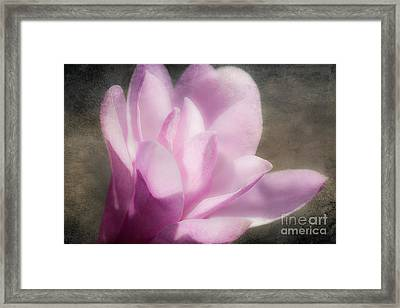 Soft Violet Flower - Greensboro North Carolina Framed Print by Dan Carmichael