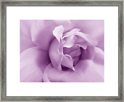 Soft Violet Rose Flower Framed Print by Jennie Marie Schell