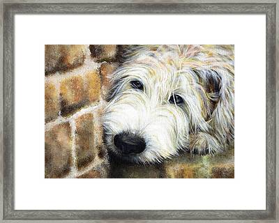 Soft Wheaten Terrier Framed Print by Natasha Denger