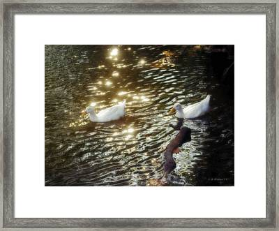 Soft White Framed Print by Brian Wallace
