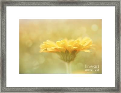 Soft Yellow Gerbera Framed Print by LHJB Photography