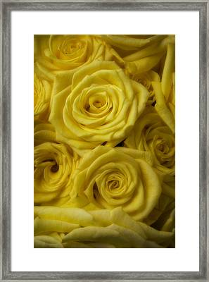 Soft Yellow Roses Framed Print by Garry Gay