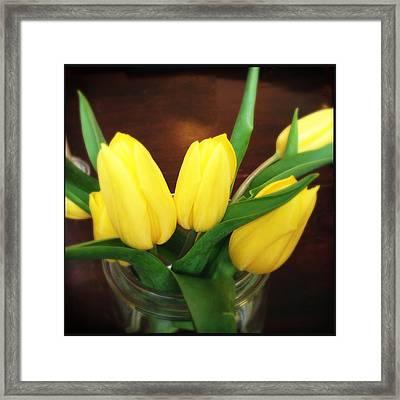 Soft Yellow Tulips Framed Print
