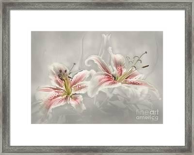 Soften Lilies Framed Print