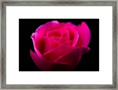 Softly Blooming Framed Print