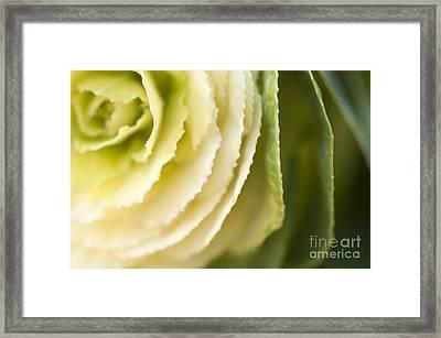 Softly Green Framed Print by Anne Gilbert