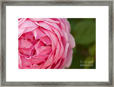 Softly I Unfold Framed Print