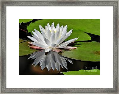Softly Framed Print by Kathy Baccari