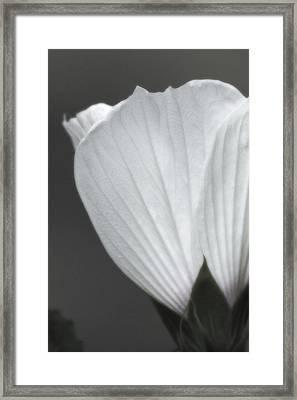 Softly Now Framed Print