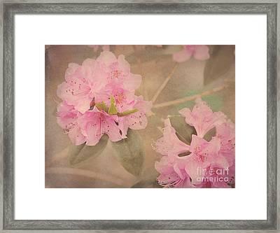 Softly Pink Framed Print by Arlene Carmel