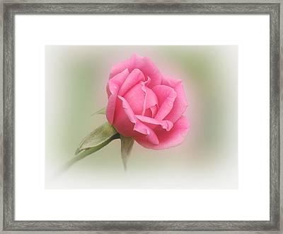 Softly Pink Framed Print by Sandy Keeton
