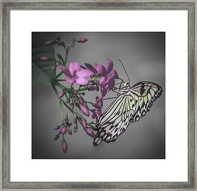 Softly Reflected On A Wing Framed Print by Jill Balsam