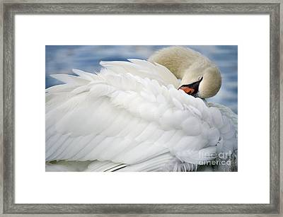 Softly Sleeping Framed Print by Deb Halloran