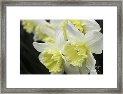 Softly Spring Framed Print by Arlene Carmel