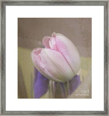 Softly Tulip Framed Print by Arlene Carmel